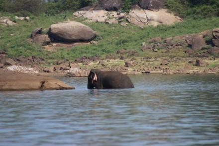 Elephant in the lake, Gal Oya NP, Sri Lanka