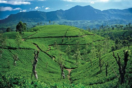 Typical Hill Country view, Sri Lanka