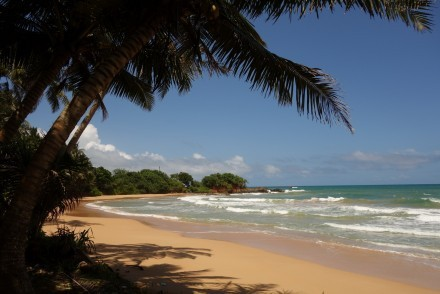 Sun-drenched and palm-fringed golden sandy beach in Sri Lanka