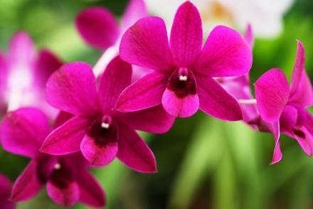 Colourful flowers, Kandy, Sri Lanka
