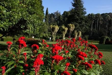 Flowers, Peradeniya Botanic Gardens, Kandy, Sri Lanka