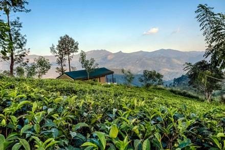 Knuckles Mountain Range from Madulkelle Tea & Eco Lodge, Sri Lanka