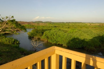View of mangroves from Kudakalliya Bungalow, Arugam Bay, Sri Lanka