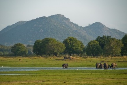 View across the wildlife reserve, Minneriya National Park, Sri Lanka