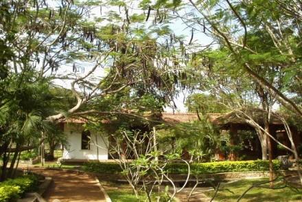Standard Room seen through Tamarind trees, Palm Garden Village Hotel, Anuradhapura, Sri Lanka