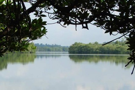 Riverboat safari around the lagoons and backwaters of the mighty Madu Ganga, Bentota, Sri Lanka