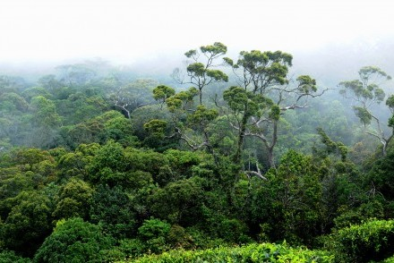 Sinharaja Biosphere Reserve around The Rainforest Ecolodge, Sinharaja, Sri Lanka