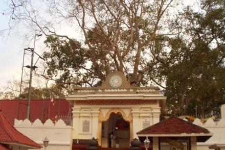 Sri Maha Bodhi, the sacred Bo tree, Mahavihara, Anuradhapura, Sri Lanka
