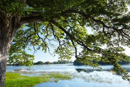 Tranquil Tissa Wewa lake from EKHO Safari Tissa, Tissamaharama, Sri Lanka