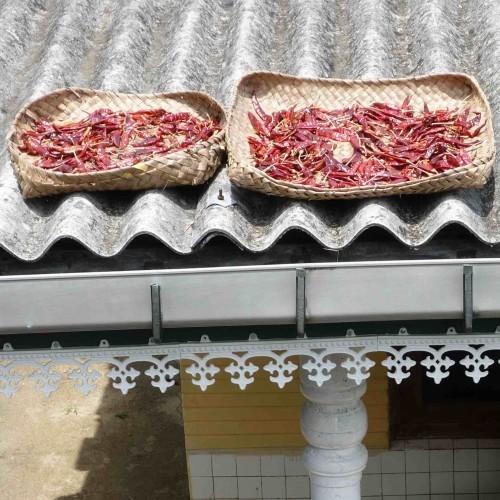 Chillies drying, Sri Lanka
