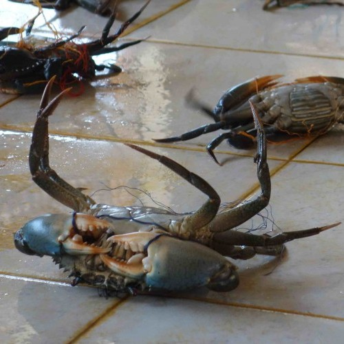 Crab at a fish market, Sri Lanka