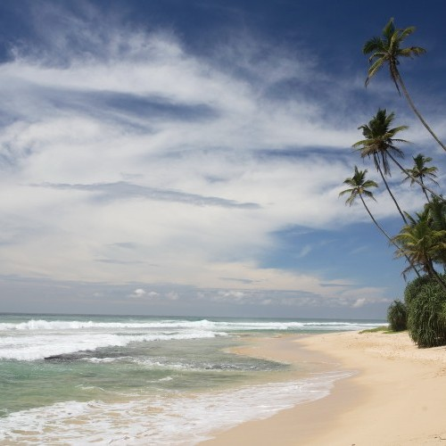 Palm-fringed tropical beach along the island's west coast, Sri Lanka
