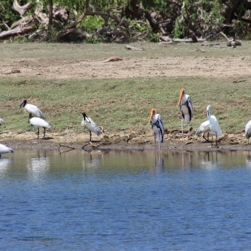 Bird sanctuary and national park, Bundala, Sri Lanka