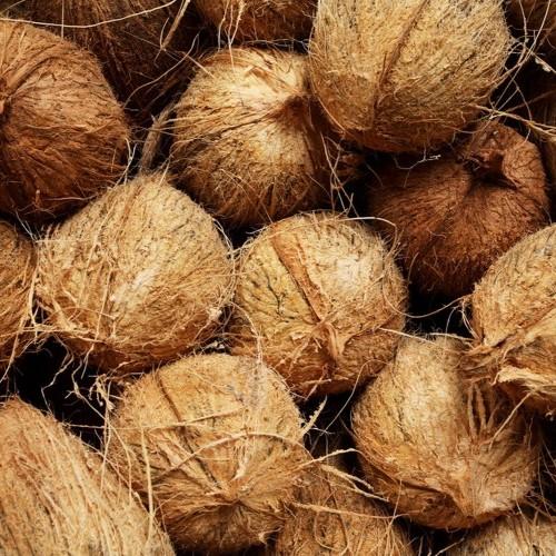 Coconuts, Sri Lanka