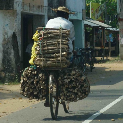 Firewood vendor on his bicycle, East Coast, Sri Lanka