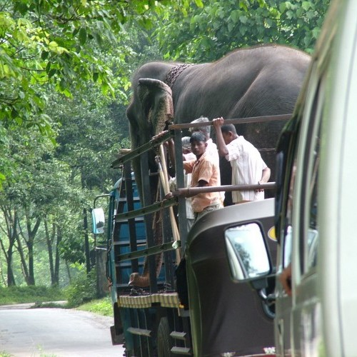 Elephant being transported by truck, Sri Lanka