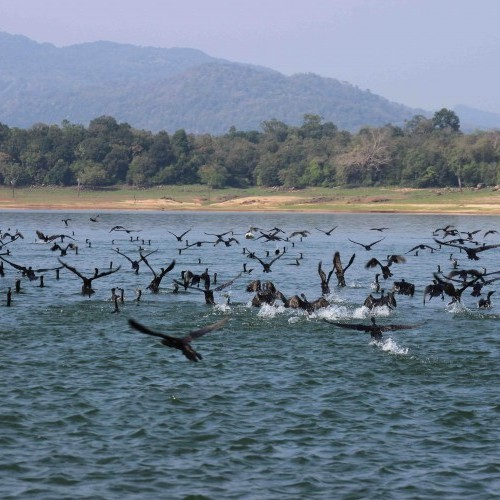 Cormorants, Gal Oya National Park, Sri Lanka