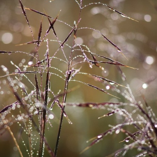 Morning dew, Horton Plains, Sri Lanka