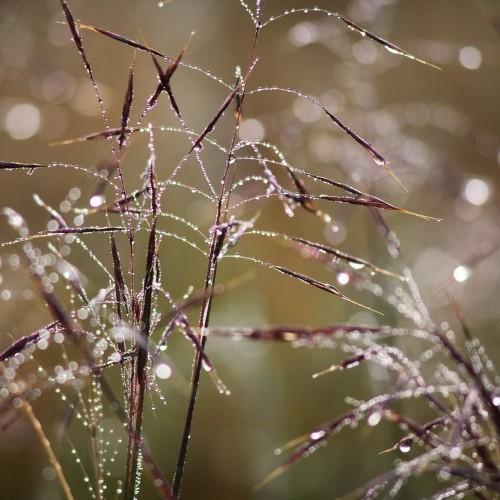 Morning dew, Horton Plains, Sri Lanka