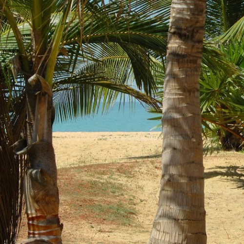 View through palm trees and across a golden sandy beach to the turquoise Indian Ocean beyond, Sri Lanka