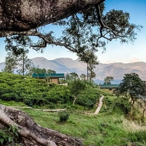 Tea and mountains, Madulkelle Tea & Eco Lodge, Knuckles, Sri Lanka