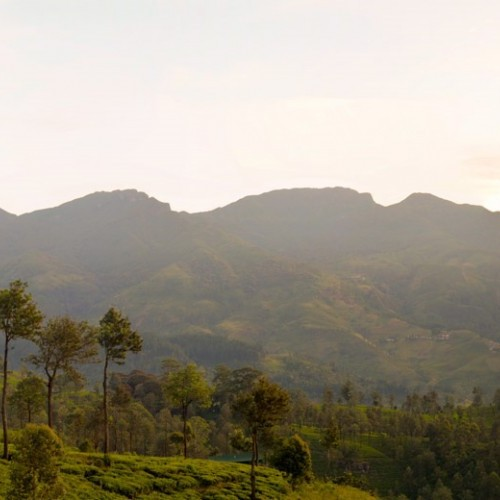 Knuckles Mountain Range from Madulkelle Tea & Eco Lodge, Sri Lanka