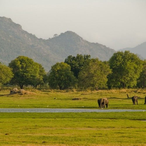 Minneriya National Park, Sri Lanka