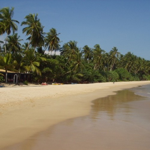 Palm-fringed sandy beach, Mirissa, Sri Lanka