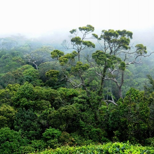 The last pocket of the island's once extensive tropical rainforest, Sinharaja, Sri Lanka