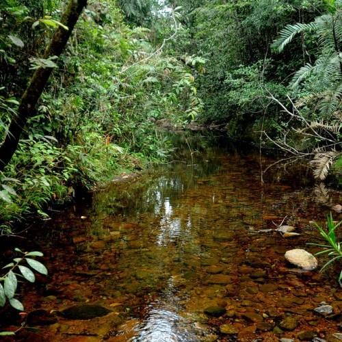 Jungle stream around The Rainforest Ecolodge, Sinharaja, Sri Lanka