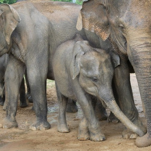 Elephant family, Yala West National Park, Sri Lanka