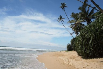 Palm-fringed, golden sandy beach, Sri Lanka