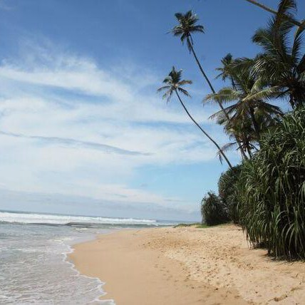 Palm-fringed tropical beach, Sri Lanka