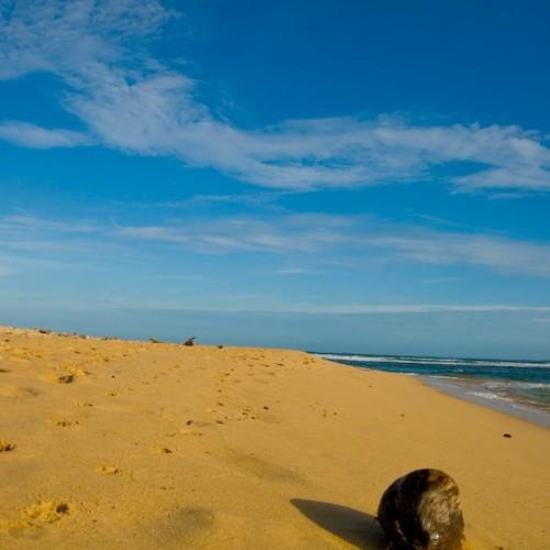 Coconut on the shoreline, Unawatuna, Sri Lanka